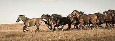 Running_Horses_Toned 72